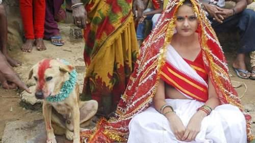 Inde: Une adolescente indienne forcée d'épouser un chien…errant